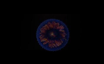 Captura de pantalla 2017-08-04 a la(s) 10.25.46